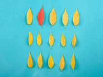 Red Leaf In Pile Of Yellow Autumn Leaves On Turquoise Table Stock Images