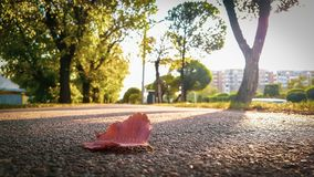 Red leaf at the road royalty free stock image