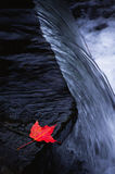 Red leaf on rock. Single red maple leaf resting on rock stock photo