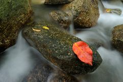 Red Leaf on rock Stock Photo