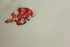 The red leaf on the sand Royalty Free Stock Photos