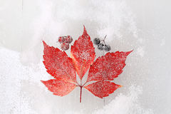 Red leaf on a snowy background Royalty Free Stock Images