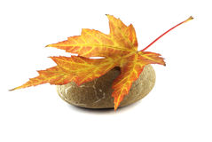 Red leaf on stone Stock Photography