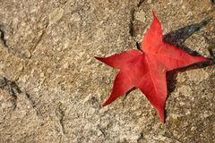 Red leaf on stone Royalty Free Stock Images