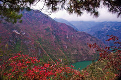 Red leaf of Three Gorges Stock Photos