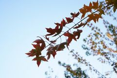Red leaf and tree in fall. Red leaf and tree with a bird in fall Stock Photo