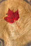 Red Leaf on tree stump Royalty Free Stock Photography