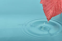Red leaf. On water with waves and drops Royalty Free Stock Photography