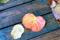 Red leaf on a wet wooden pavement.  Stock Photo