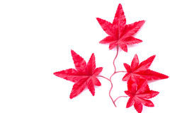 Red leaf with a white background Royalty Free Stock Photography