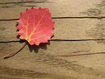 Red leaf on wooden background Royalty Free Stock Photo