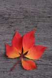 Red leaf on wooden background Stock Photo