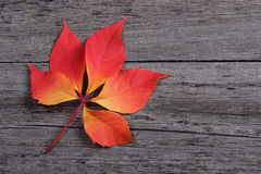 Red leaf on wooden background Stock Images