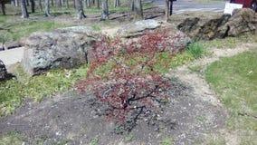 Baby tree stock image