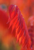 Red leafs with blurry background Stock Photography