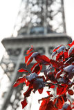 Red leafs Eiffel Royalty Free Stock Image