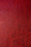 Red leather background. Close up Stock Image