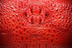 Red Leather texture, crocodile skin background. Stock Photos