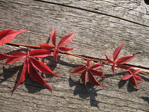 Red leaves. And an old wood stock photos