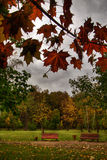 Red leaves. Autumn Landscape. Park and Red leaves stock photography