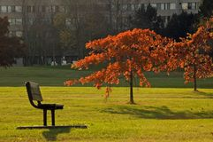 Red leaves. On green grass at sunset Stock Image