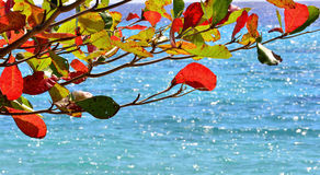 Red leaves of Almond and azure sea. Stock Photo