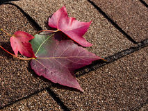Red leaves on asphalt shingles Stock Photo