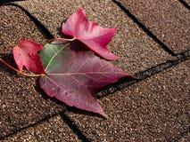 Red leaves on asphalt shingles Stock Photo