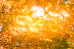 Red leaves in autumn background Stock Photos