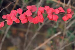 Red leaves in autumn stock photography