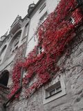 Red Autumn Leaves on a historic facade stock photography