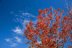 Red Leaves And Autumn Sky Royalty Free Stock Photo