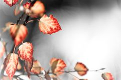 Red leaves background. Beautiful background made of autumn, red leaves, copy space stock photography