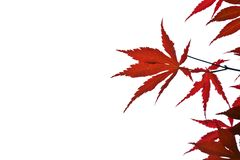 Red leaves background Stock Images