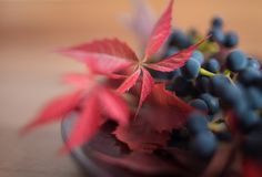 red leaves close-up macro blue berries still life bokeh background stock images