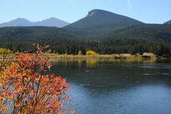 Red Leaves and Blue Lake. Red Autumn Leaves at the Lily Lake, Estes Park, Colorado, USA royalty free stock photos