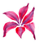 Red leaves. Bunch of red leaves on a white background, watercolor illustration and paper texture stock illustration