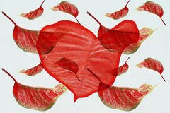 Red leaves collage Stock Photos