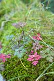 Red leaves contrasting with verdant moss on a wall Royalty Free Stock Photo