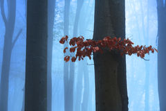 Red leaves in the fog Royalty Free Stock Photo