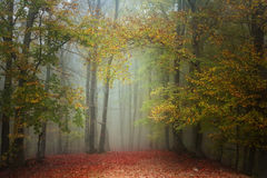 Red leaves in a foggy autumn forest Stock Image