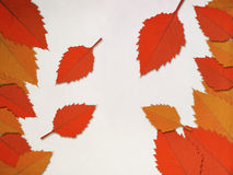 Red leaves frame Royalty Free Stock Photo