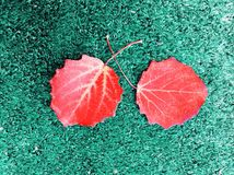 Red leaves. In green background Royalty Free Stock Photography