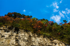 Red and green leaves under blue sky in Tianmenshan mountain. Red leaves and green leaves in Tianmenshan mountain in hunan province, China stock image