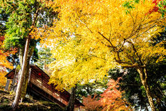 Red leaves of the maple in autumn Stock Image