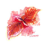 Red leaves marker and watercolor painting abstract Autumn Stock Photo