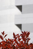 Red Leaves by Modern Skyscraper Stock Photos