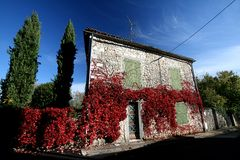 Red leaves on old house Stock Image