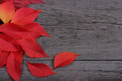 Red leaves on old wooden background Stock Photo