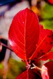 Red leaves. Autumn in the city Stock Photography
